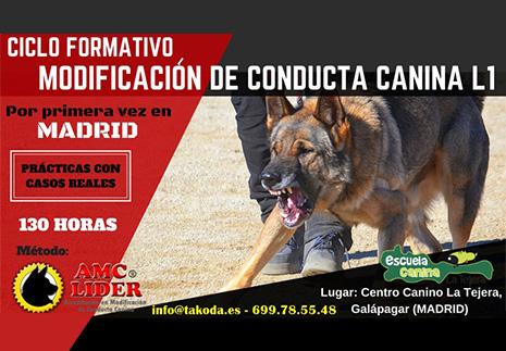 ciclo_formativo_expertos_modificacion_conducta_canina-takoda