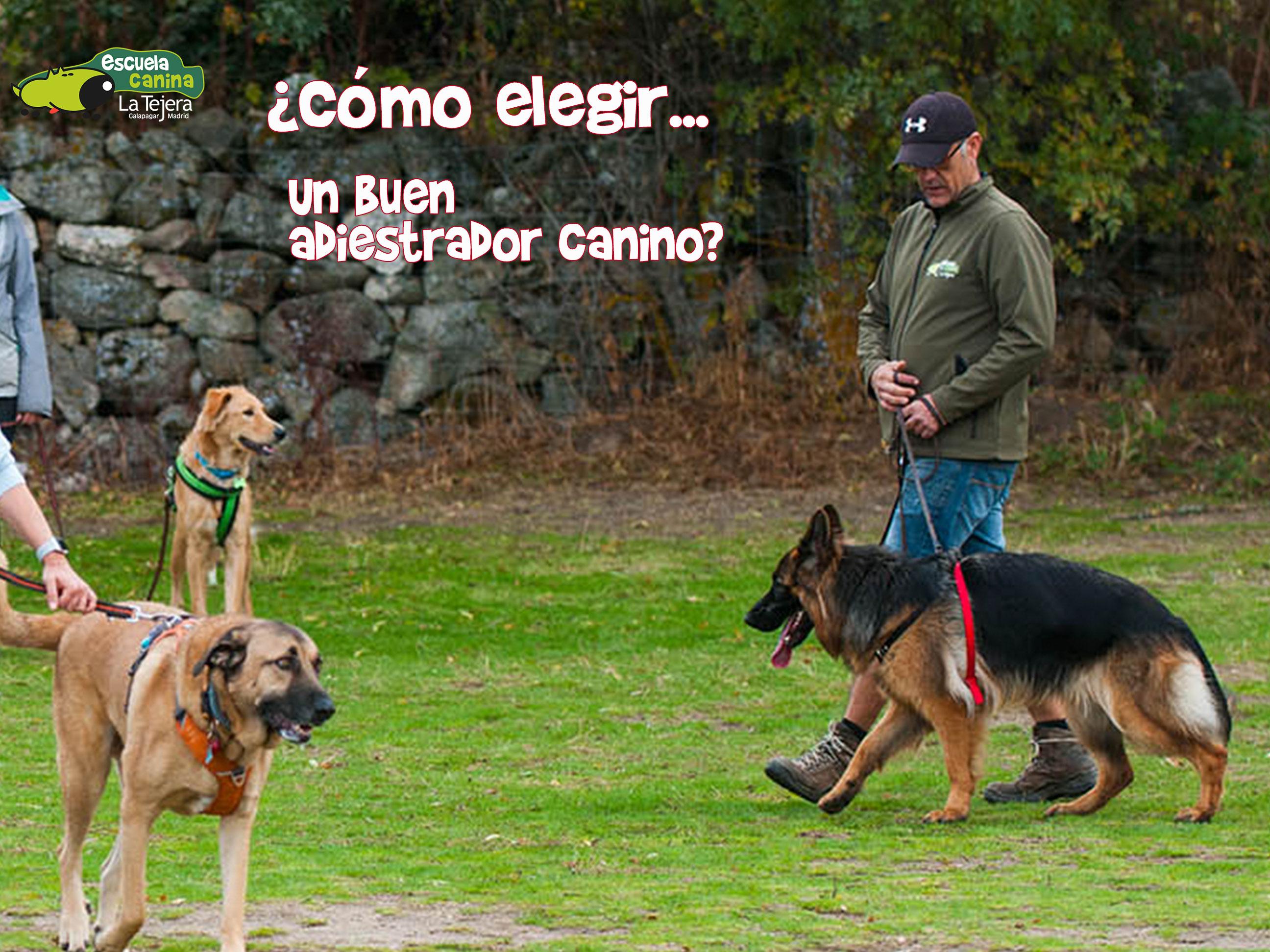 cabecera-post-como-elegir-un-buen-adiestardor-canino
