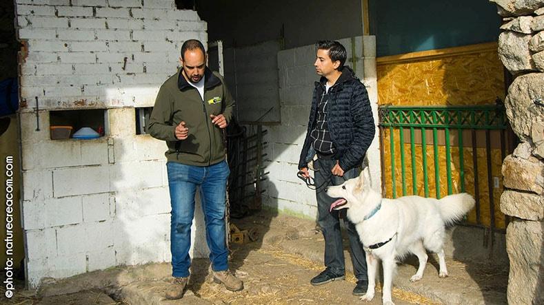 galeria-imagenes-perros-detectores-3